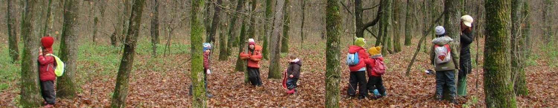 Școala în pădure